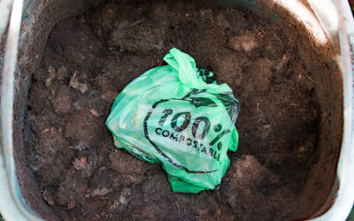 THE DIFFERENCE BETWEEN BIODEGRADABLE PACKAGING, INDUSTRIAL COMPOSTABLE AND HOME COMPOSTABLE